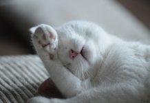 sober up quickly - nap