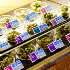 original-1284769735 Cannabis Dispensaries Display