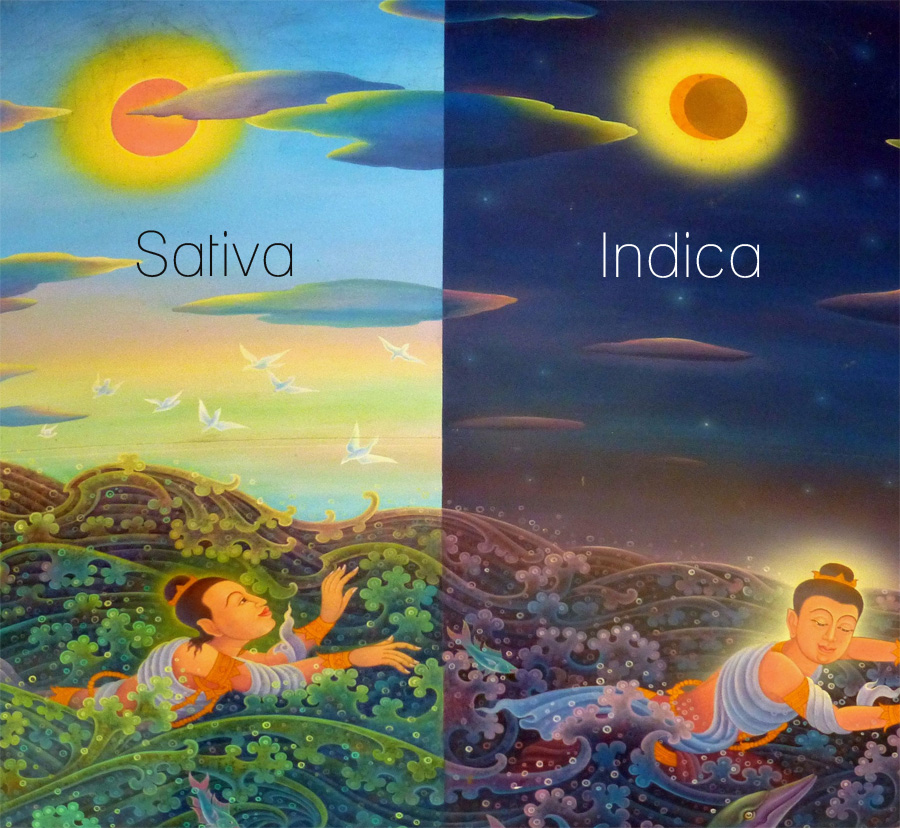 Sativa and Indica Painting