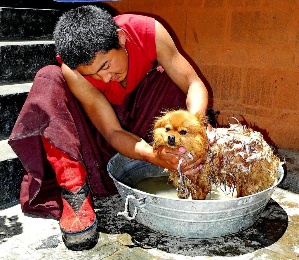 doggie bath