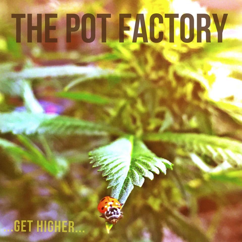 grow cannabis professionally