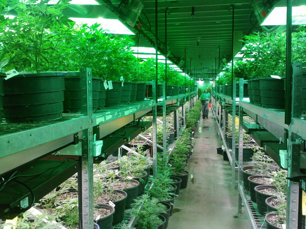 How Much Does it Cost to Grow Your Own Weed?