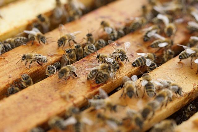 honey bees making cannahoney